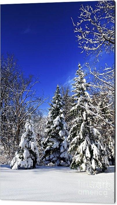 Elena Elisseeva - Winter forest under snow