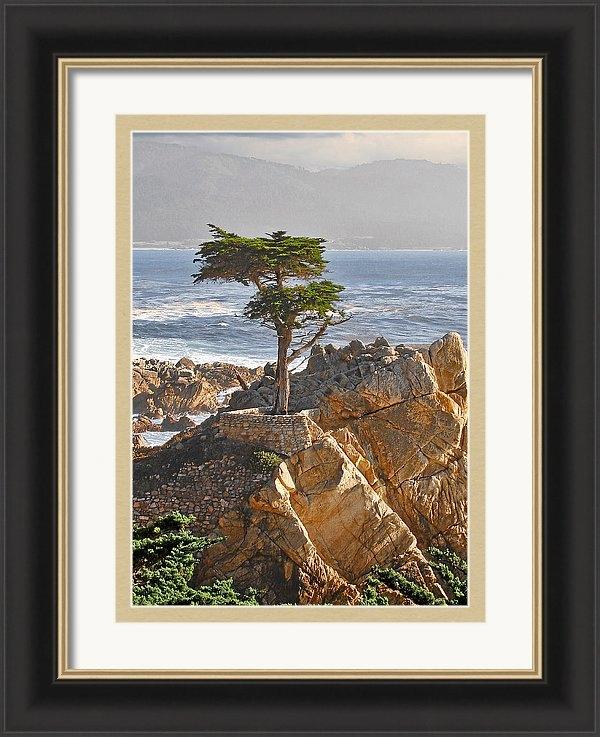 Christine Till - Lone Cypress - The icon of Pebble Beach California