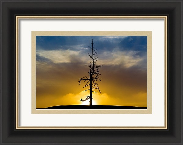 Mike Centioli - Lonely Tree on Old MacDonald
