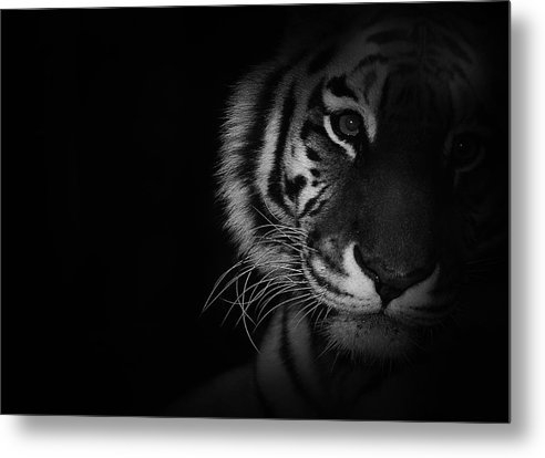 Martin Newman - Tiger Eyes