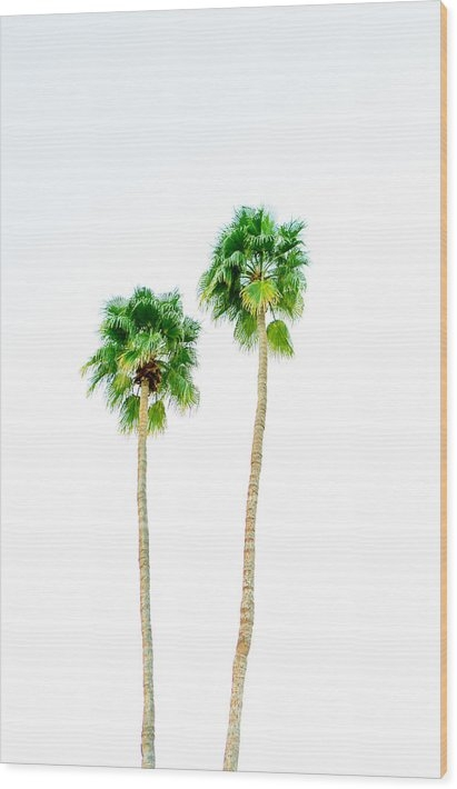 Ariane Moshayedi - Palm Attitude 3