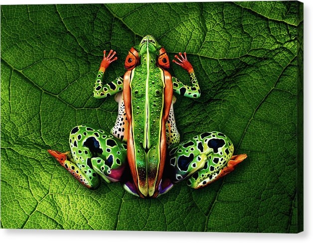 Johannes Stoetter - Frog Bodypainting Illusion