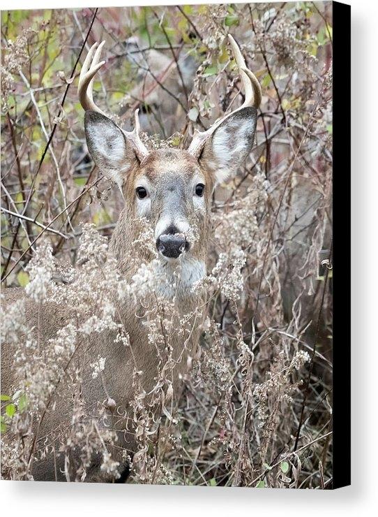 Everet Regal - Hunters Dream