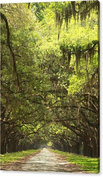 Adam Jewell - Splendid Oak Drive