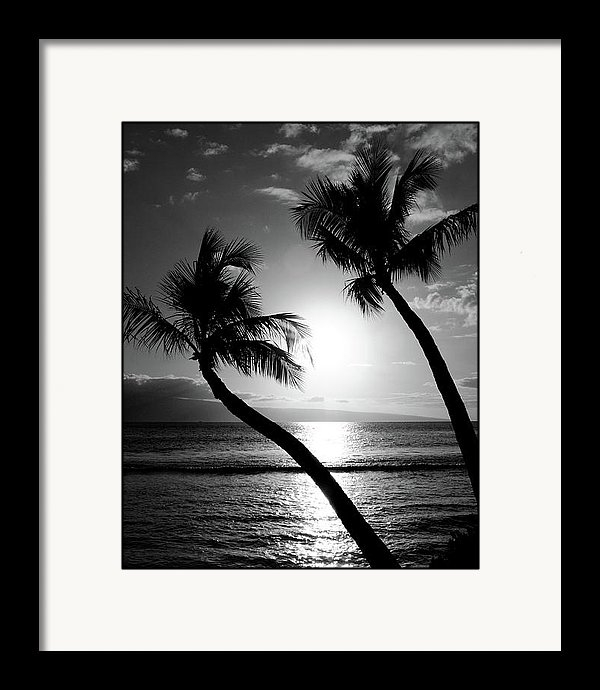 Pierre Leclerc Photography - Black and White tropical