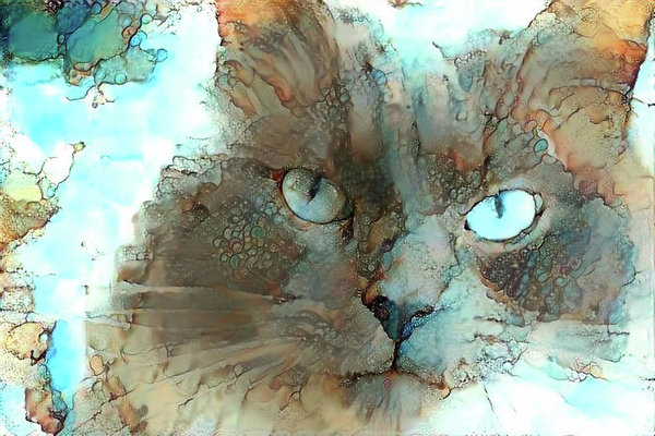 Peggy Collins - Blue Eyed Persian Cat Watercolor