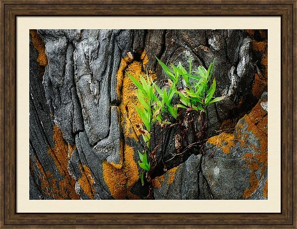 Jane Selverstone - Rocks Lichens and Leaves