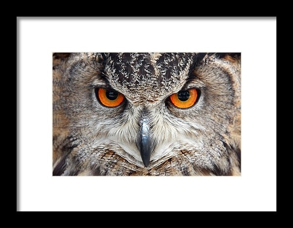 Pierre Leclerc Photography - Great horned Owl