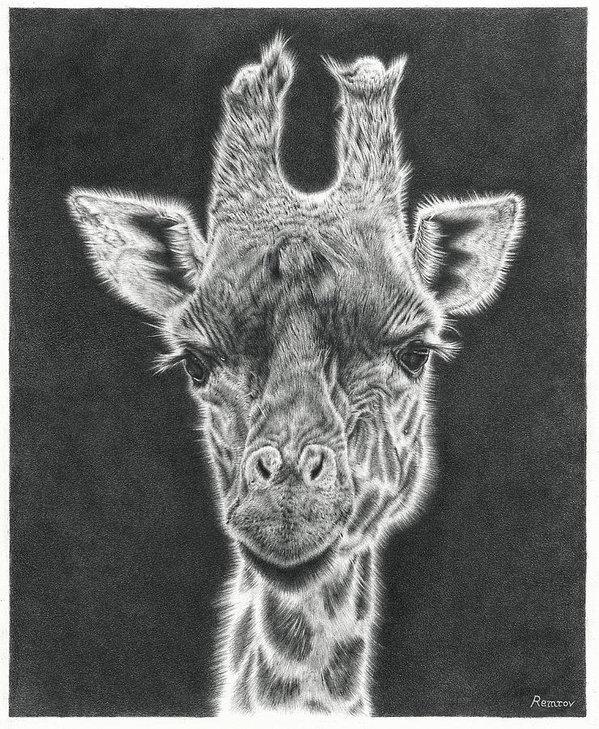 Remrov - Giraffe Pencil Drawing