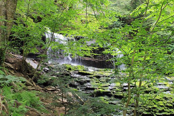 Susan Jensen - Waterfall Ricketts Glen State Park PA