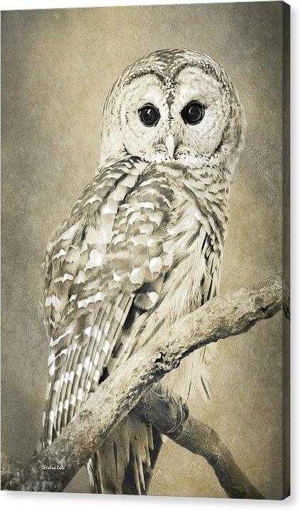 Christina Rollo - Sepia Owl