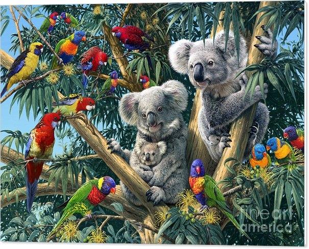 Steve Read - Koala Outback