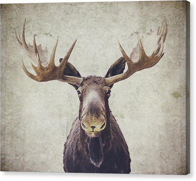 Nastasia Cook - Moose