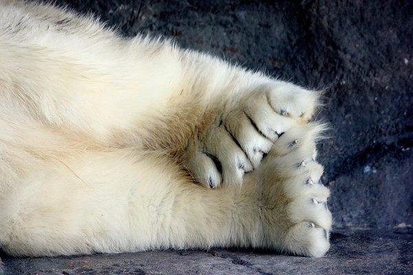 Sarah Lilja - Polar Bear Paws