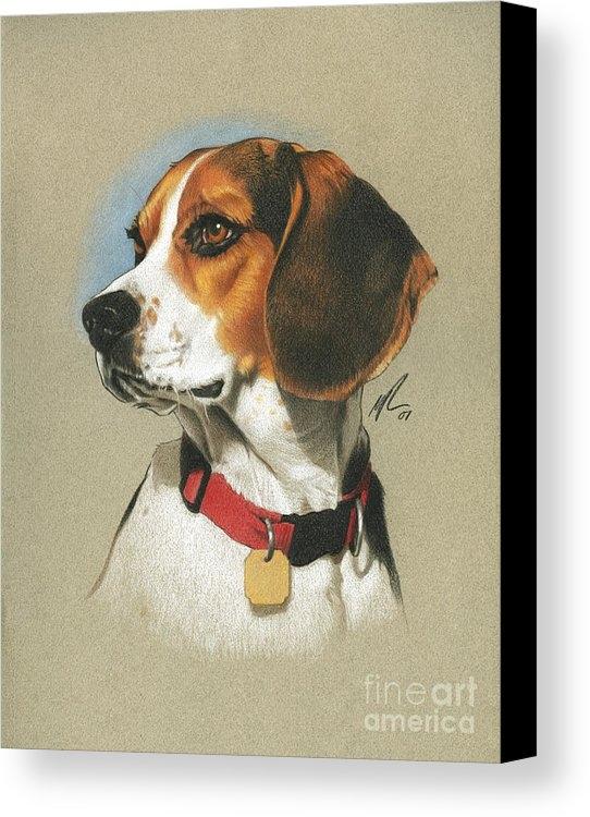 Marshall Robinson - Beagle