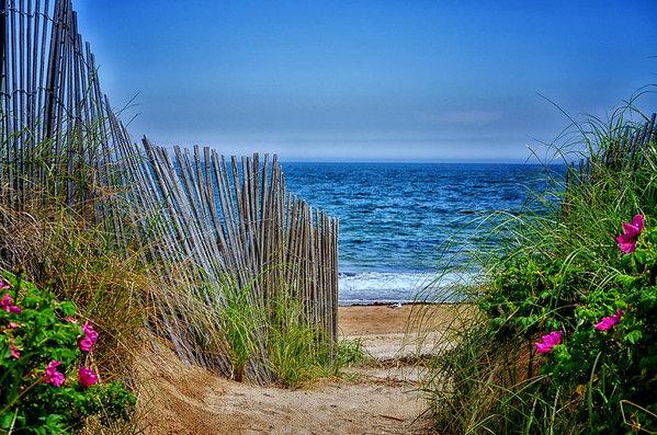 Tricia Marchlik - Beach Roses