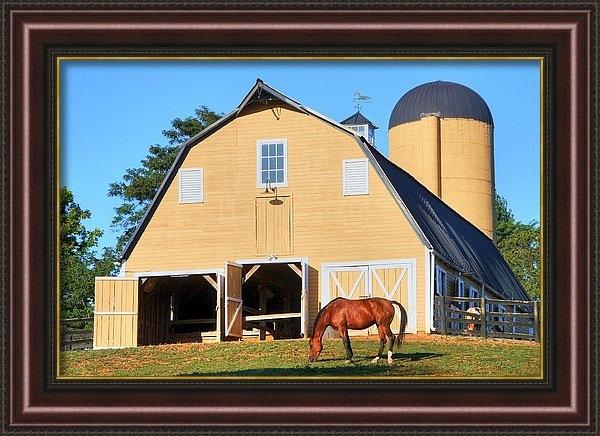 Mitch Cat - Farm
