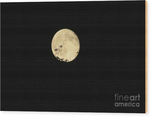 Stephanie Hanson - Leaves on the Moon