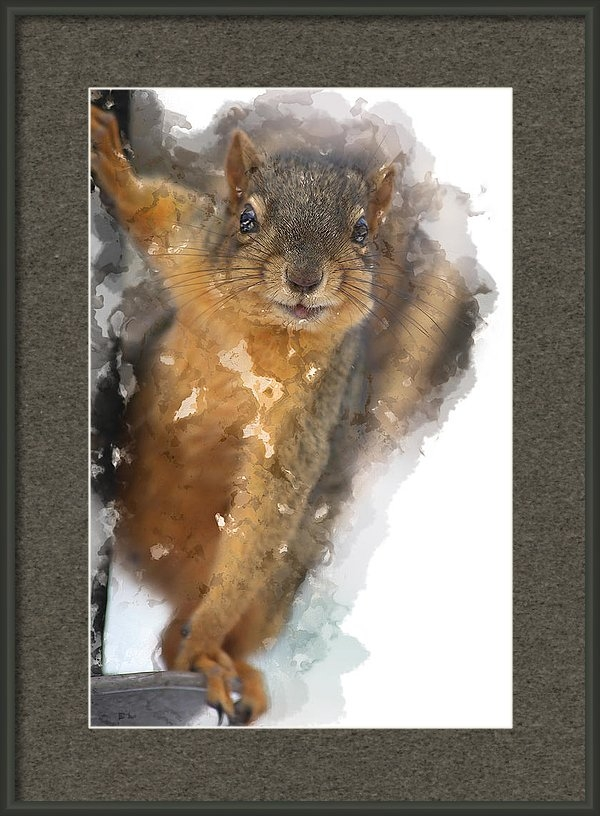 Elaine Plesser - Cheeky Squirrel
