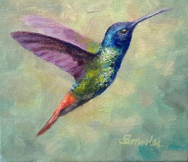Sonsoles Shack - Hummingbird