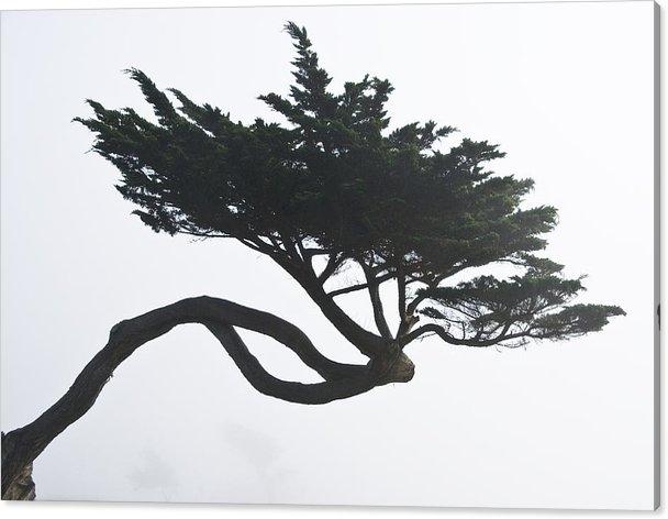 Scott Lenhart - Half Moon Bay Cypress
