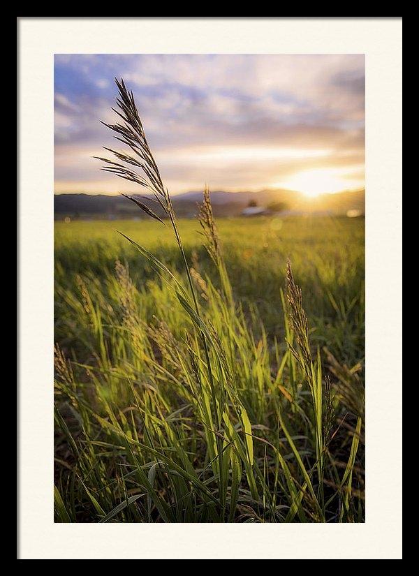 Chad Dutson - Meadow Light