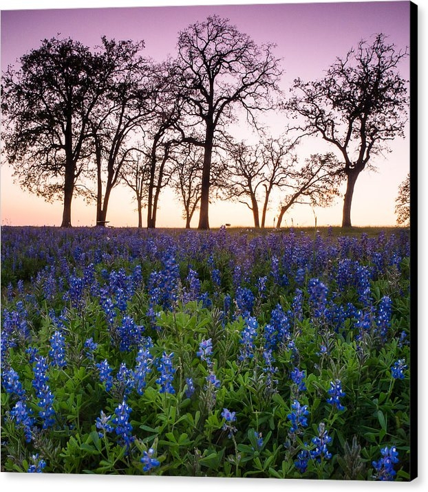 Ellie Teramoto - Trees on the top of bluebonnet hill - wildflower field in Lake Somerville Texas