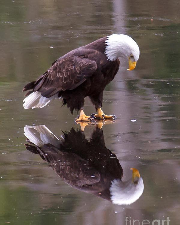 James Geddes - Eagle On Ice