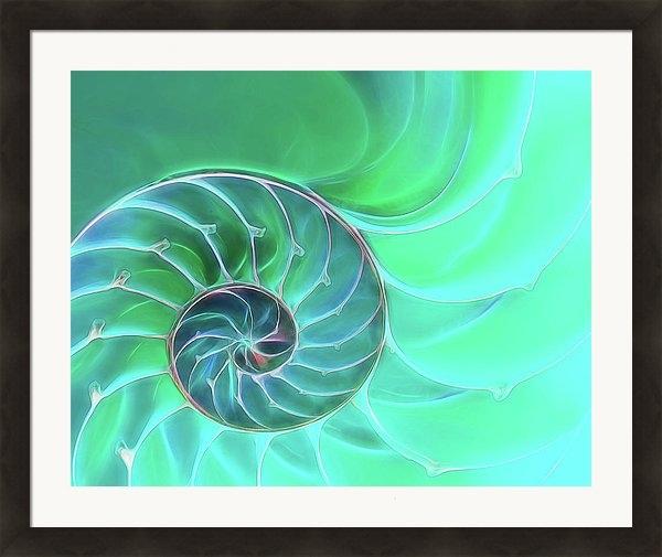 Gill Billington - Nautilus Aqua Spiral