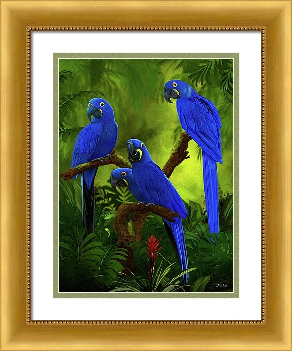 Jurgen Doelle - Blue Hyacinth Macaw