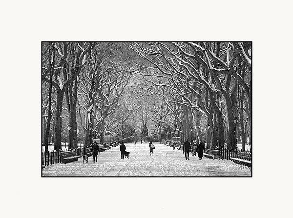 Dave Beckerman - New York City - Poets Walk Winter