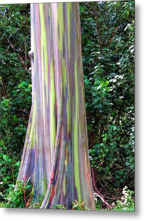 Dawn Eshelman - Rainbow Eucalyptus 3