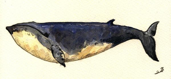Juan  Bosco - Minke whale