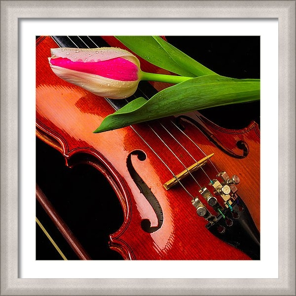 Garry Gay - Tulip And Violin
