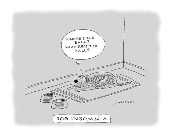Mick Stevens - Title: Dog Insomnia. A Dog At Night Thinking