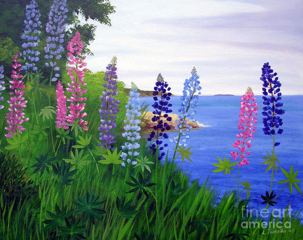 Laura Tasheiko - Maine Bay Lupine Flowers
