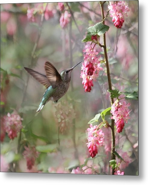 Angie Vogel - Hummingbird Heaven