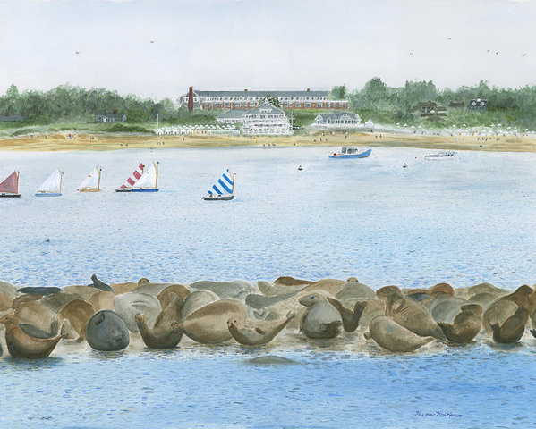 Heather MacKenzie - Seals at Chatham Bars Inn