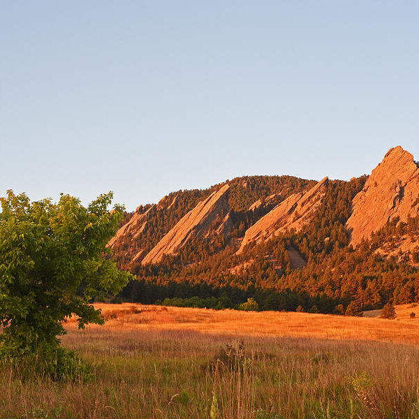 Toby McGuire - The Flatirons Boulder Colorado from Chautauqua Park Tree