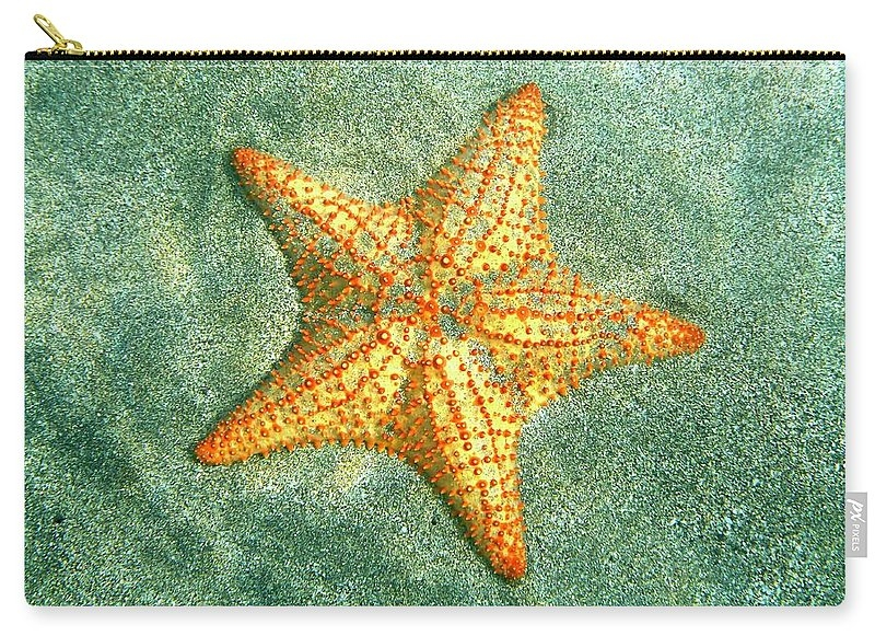 Starfish Geometry by Annette Kirchgessner