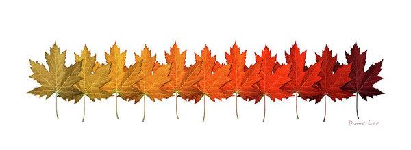 Dave Lee - Fall Leaf Lineup