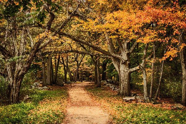 Jeff Folger - Walk in the woods