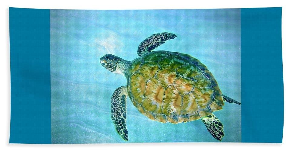 Green Sea Turtle in Blue Water by Annette Kirchgessner