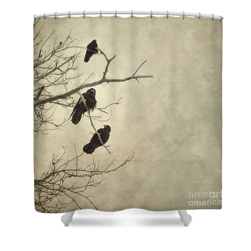 This Is A Beautiful Shower Curtain Especially If You Like Crows We Have Very Boring Bathroom With Fake Beigy Plastic Wall Tiles And Run Of The Mill