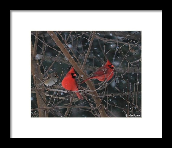 Winter Cardinals by Doug Hoover