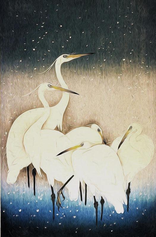 Cranes  by Shanina Conway