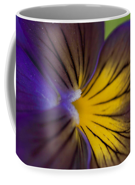 Purple on yellow pansy by Jeff Folger
