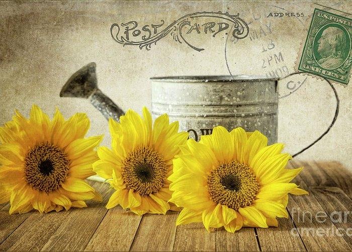Sunflowers Postcard by Elisabeth Lucas