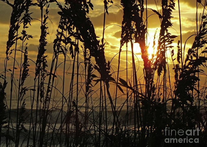 Sea Oats Silhouette And Ocean Sunrise by Cindy Treger