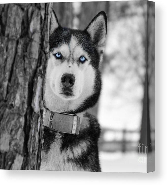 My Baby Blue Eyes by Jennifer White